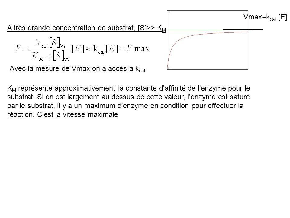 Vmax=kcat [E] A très grande concentration de substrat, [S]>> KM. Avec la mesure de Vmax on a accès a kcat.